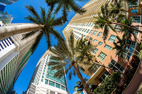 A stock photo of palm trees and buildings in the Brickell area of Miami, Florida.