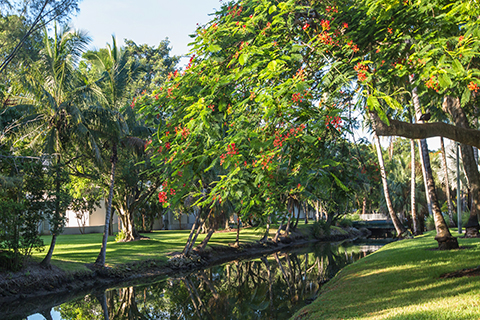 A photo of landscaping at the University of Miami Coral Gables campus.