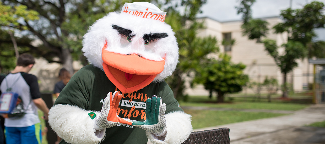 A photo of Sebastian the Ibis, who is the University of Miami mascot.